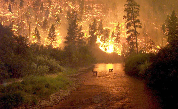 Divine Inferno – The Modern Forest Fire